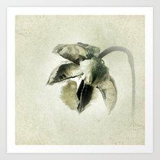 Coastal Cotton Tree - Hibiscus Art Print