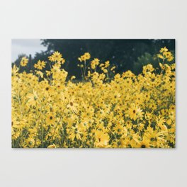 Daisies For Days Canvas Print