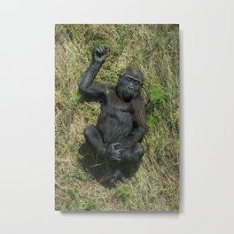Sunbathing Gorilla Baby Shufai Metal Print