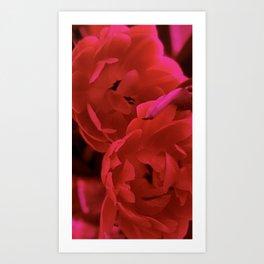 Romance Art Print