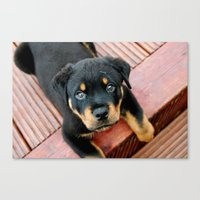 rottweiler Canvas Prints featuring Rottweiler pup by MarkStantonDesign
