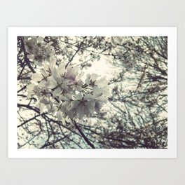Some flowers grow Art Print