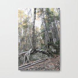 Abitibi Nature5 Metal Print