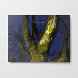 Synthetic trunks. Digital photo Metal Print