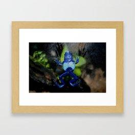 Poison Dart Frog Belly- Dendrobates Azureus Framed Art Print