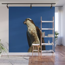 Osprey With His Dinner Leftovers Wall Mural