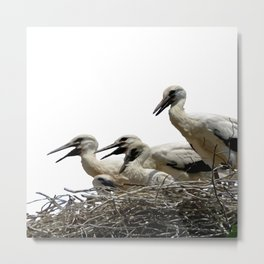 Storks and Fledglings Vector Metal Print