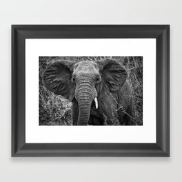 Elephant Charge Framed Art Print