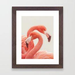 FLAMINGOS FLAMINGOS Framed Art Print