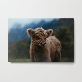 Baby Highland Cow Metal Print