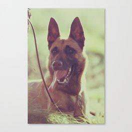 Malinios Beauty dog picture Canvas Print