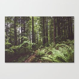 Woodland - Landscape and Nature Photography Canvas Print