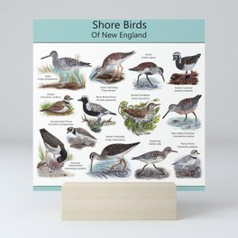 Shore Birds of New England Mini Art Print