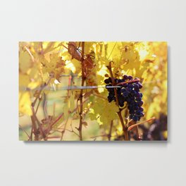 Fall Grapes Metal Print