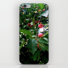Among the Cherries iPhone Skin