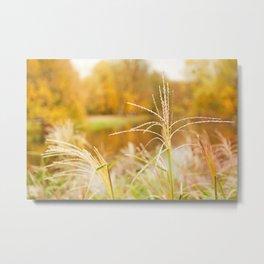 Miscanthus straw ornamental grass Metal Print
