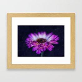 Purple Gerbera Daisy Closeup Framed Art Print