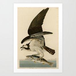 Vintage Osprey Catching a Fish Illustration (1838) Art Print