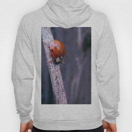 Macro ladybug Hoody
