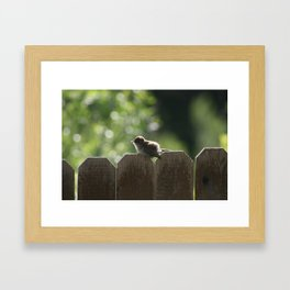 Little Birdie  Framed Art Print