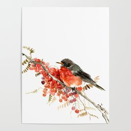 American Robin and Berries Poster