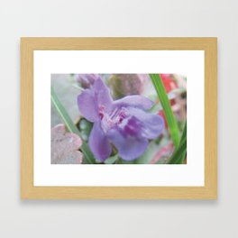 Ground Ivy Framed Art Print