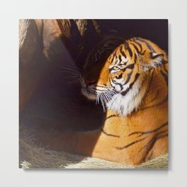 It's the Eye of the Tiger Metal Print