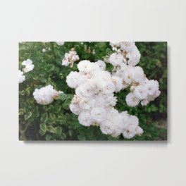 White Flowers in Sonoma Metal Print