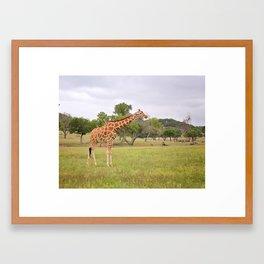 Wild and free! Framed Art Print