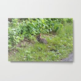 Baby Bunny in the Grass Metal Print