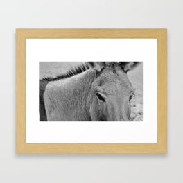 South African Eyes 01 Framed Art Print