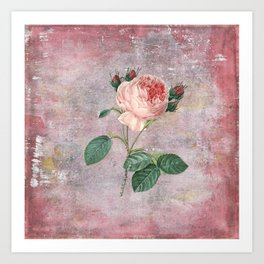Vintage & Shabby Chic - Rose on pink grunge background  - Roses and flowers garden Kunstdrucke