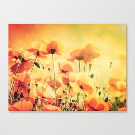 Poppies in the Sunlight Canvas Print