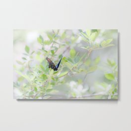 """Swallowtail Splendor"" by Murray Bolesta Metal Print"