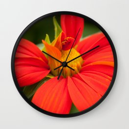 Mexican Sunflower Unfolding Wall Clock