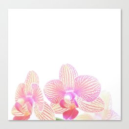 orchid bliss Canvas Print