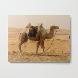 Camel in the desert Metal Print