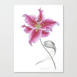 Lily 02 Botanical Flower * Pink Stargazer Rubrum Lily  Canvas Print