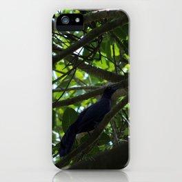 Great Tailed Grackle near Tulum iPhone Case