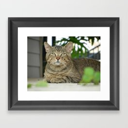 Green Eyes Framed Art Print