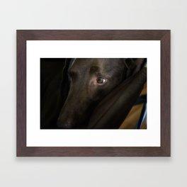 My Friend Chocolate Lab Framed Art Print