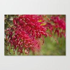 Flor roja Canvas Print