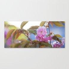 pink tree flowers Canvas Print
