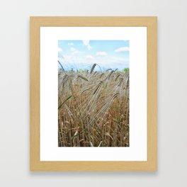 beautiful barley field Framed Art Print