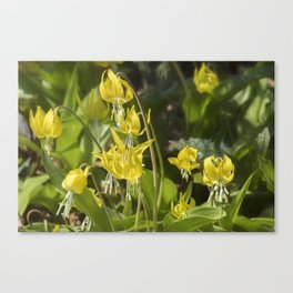 Glacier Lily Painterly Canvas Print