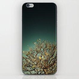 m e r i d a iPhone Skin