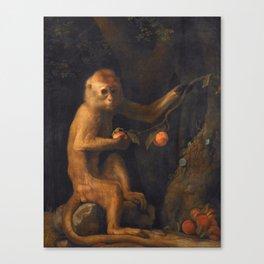 George Stubbs - A Monkey Canvas Print