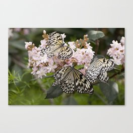 Butterfly Party Canvas Print