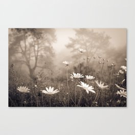 Daisies in the Fog, Guy Fleming Trail, Torrey Pines Canvas Print