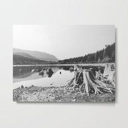Sea of Stumps Metal Print